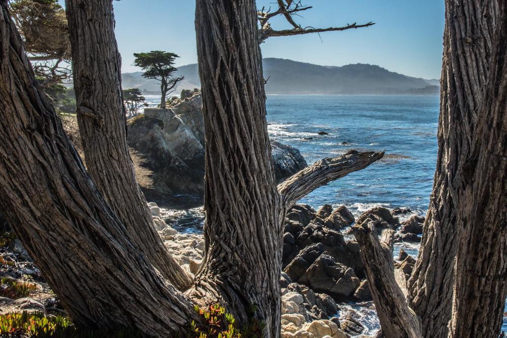 Monterey - 17-Mile Drive - Lone Cypress
